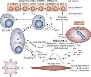 Eosinophil